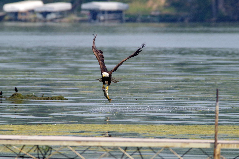 AFボーグ BORG90FLで撮影した野鳥の写真画像