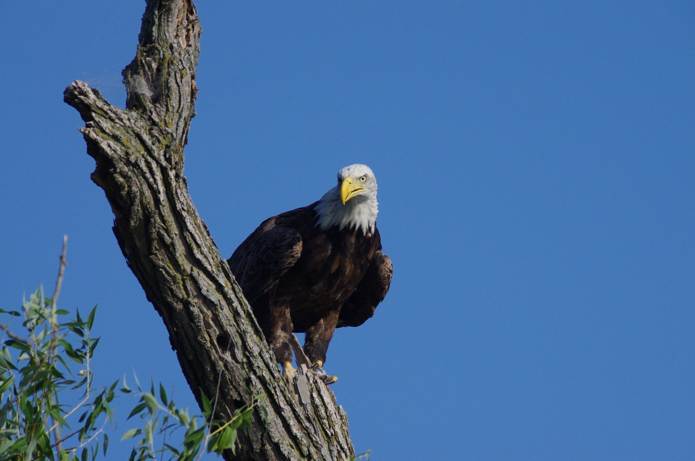 AFボーグ BORG77EDⅡで撮影した野鳥の写真画像