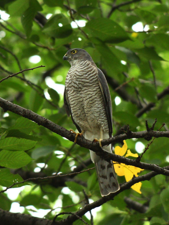 BORGで撮影した野鳥の写真画像