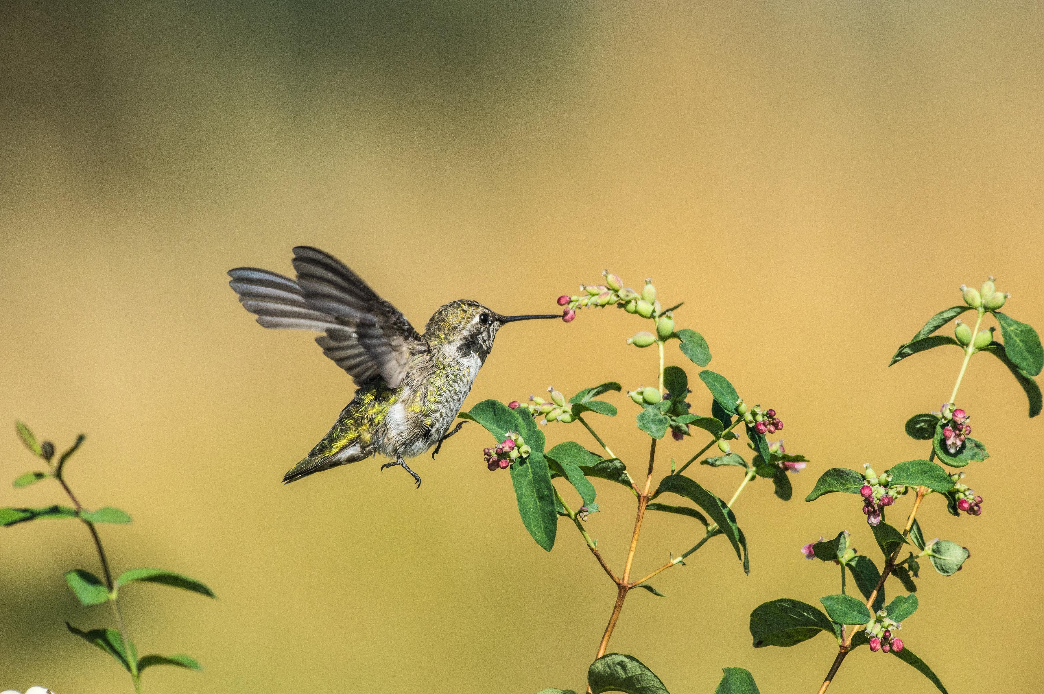 野鳥画像 BORG