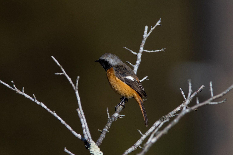 BORGで撮影した野鳥写真画像