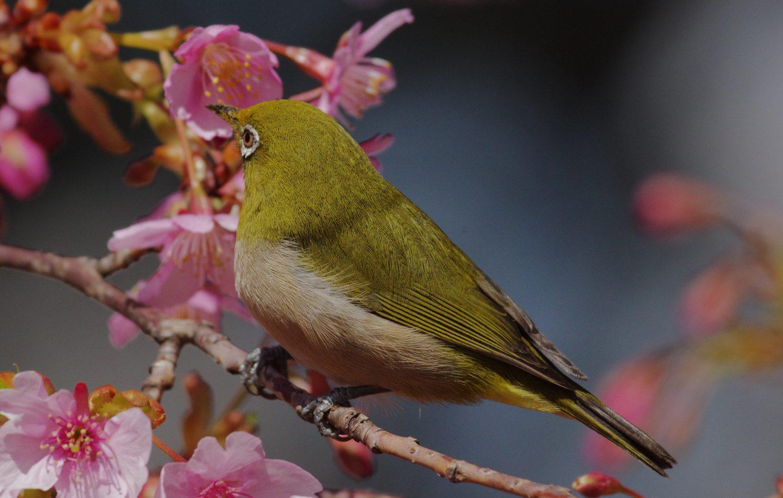 野鳥 画像